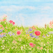 Stock Photo: Summer Flowers on Daylight Meadow, Watercolor Painted