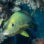 An Atlantic Ocean Species of Fish — Stock Photo #28301997