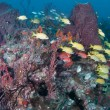 Stock Photo: Fish on reef in Florida