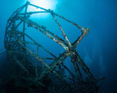 On an artificial reef in south Florida — Stockfoto