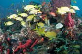 Tropical fish on a reef — Stockfoto