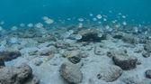Imágenes tomadas en cierta profundidad bajo el agua — Foto de Stock