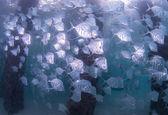 Atlantic Ocean Species of Fish — Foto Stock