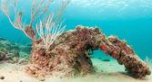Arc formé par la croissance du corail — Photo
