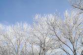 白霜树木和 sunlight.2 — 图库照片