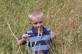 Little blond boy in dark blue striped T-shirt on poppy field — Stock Photo