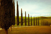 Typical tuscany countryside — Stock Photo