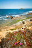 Coast portugal — Stock Photo