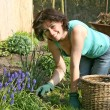 Woman working in the garden — Stok fotoğraf