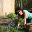 Stock Photo: Woman working in the garden