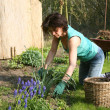 Woman working in the garden — Foto de Stock
