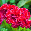Stock Photo: Red exotic flover