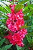 Piękne faded czerwony — Zdjęcie stockowe