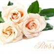 Bouquet of beautiful white roses — Foto Stock
