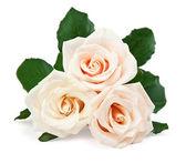 Vackra vita rosor — Stockfoto