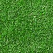 Green grass background — Stock Photo #18665665