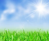 Green grass and blue sky — Stockfoto