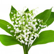 Beautiful lilies of the valley — Stock Photo #20108665