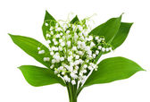 Beautiful lilies of the valley — Stock Photo