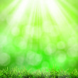 RSunny abstract green nature background — Foto Stock