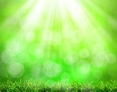 Rsunny abstraktní příroda zelené pozadí — Stock fotografie