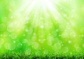 Fondo de naturaleza abstracta verde — Foto de Stock