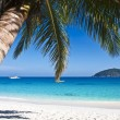 Foto Stock: Tropical white sand beach with palm trees
