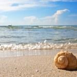 Sea shell on the sandy beach — Stock Photo