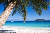 Palmiye ağaçları ile tropikal beyaz kum plaj — Stok fotoğraf