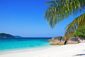 Tropical white sand beach with palm trees — Stok fotoğraf