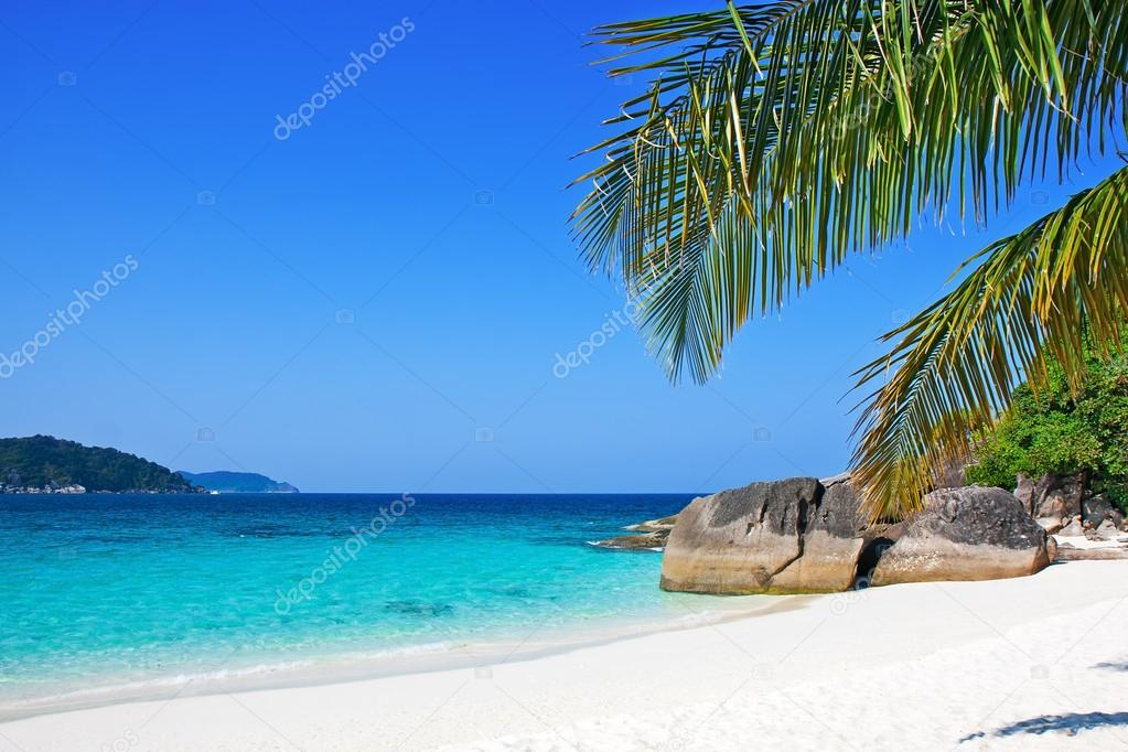 White Sand Beach Palm Tree Depositphotos 25331473 Tropical White Sand Beach With Palm Trees Jpg