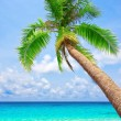 Tropical beach with palm tree — Stock Photo