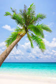 Tropical white sand beach with palm tree — Stok fotoğraf