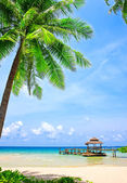 Palm tree in tropical perfect beach — Foto Stock