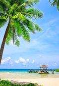 Palmowe drzewo w tropikalnej plaży idealne — Zdjęcie stockowe