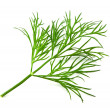 Fresh dill — Stock Photo