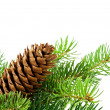 Christmas tree and cones — Stock Photo