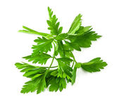 Fresh green parsley — Stock Photo
