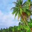 Palm trees in tropical perfect beach — Stock Photo