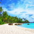 Stock Photo: Palm trees in tropical perfect beach