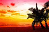 Coconut palm trees in sunset — Stock Photo