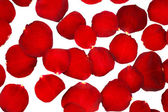 Red rose petals isolated on white — Stock Photo