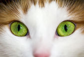 Close up of a green cat eye — Stock Photo