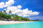 Tropical white sand with palm trees  — Stok fotoğraf