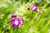 Flowers on the green meadow — Stock Photo