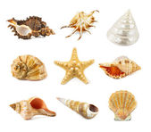 Seashell isolated on a white  — Stock Photo