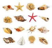 Seashell isolated on a white  — Stock Photo