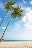 Tropical white sand with palm trees  — Stock Photo