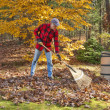Raking leaves — Stock Photo #10209712