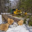 Stock Photo: Tree cutting and chipping
